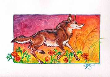 Coyote and Poppies