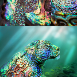 Abalone Leopard