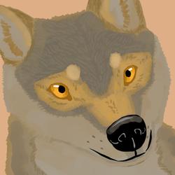 Wolf-like dog