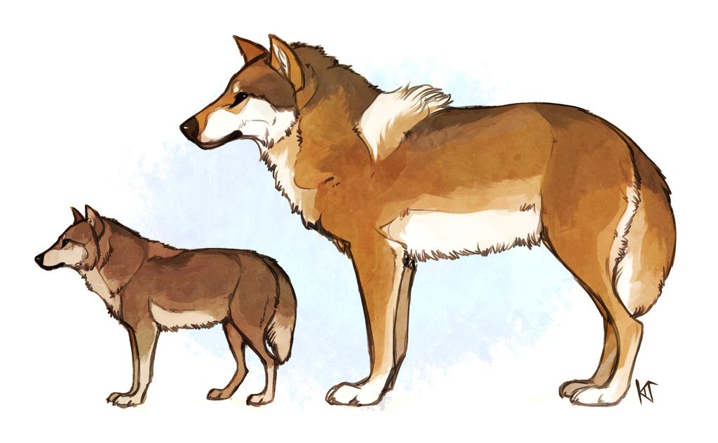 Royal Wolf Comparison