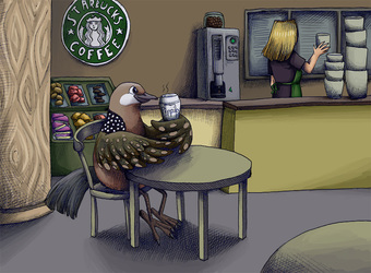 spotted dove at Starbucks
