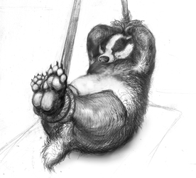 tied badger paws