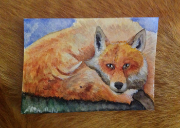 ACEO - Fox