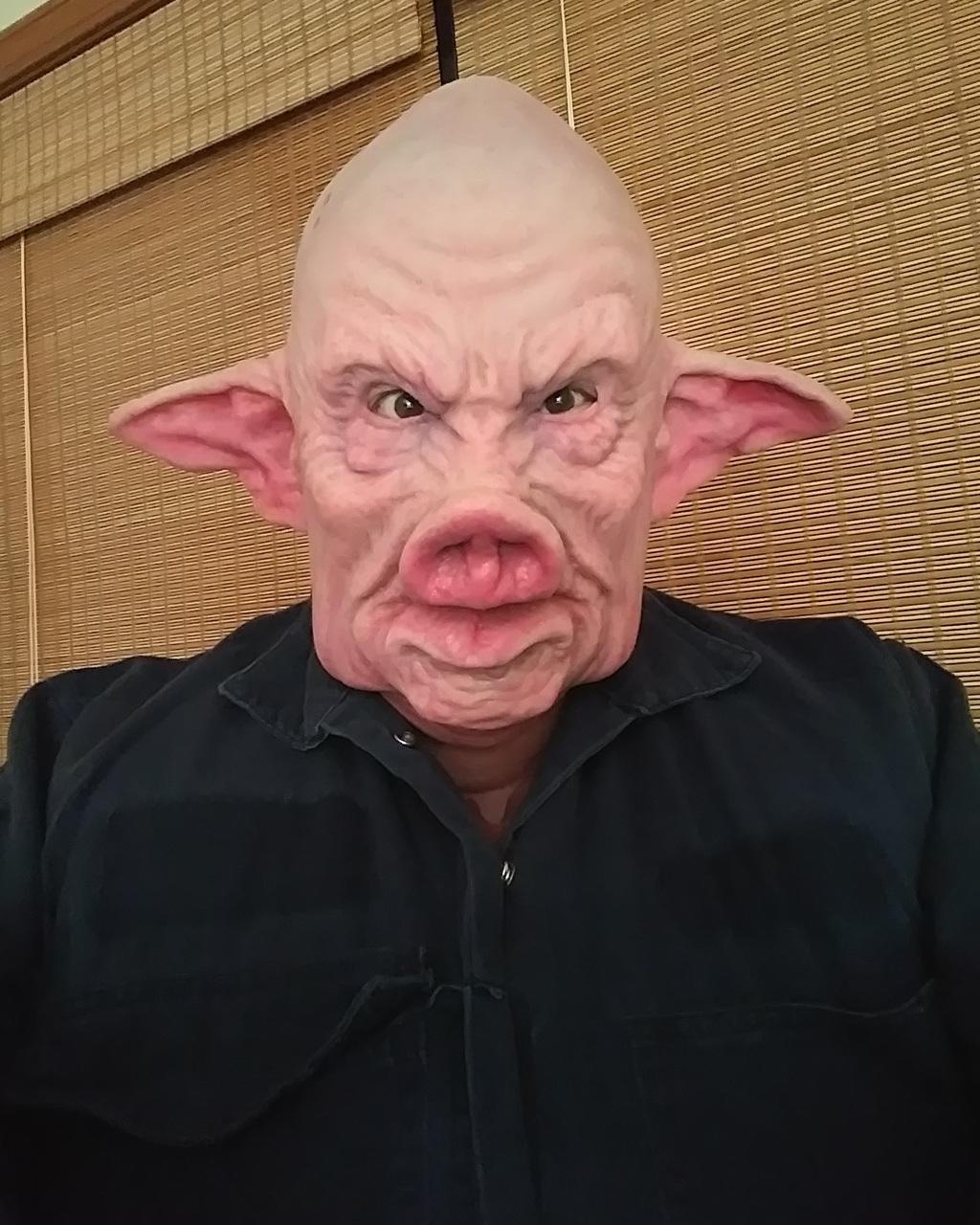 Most recent image: Boss Pig