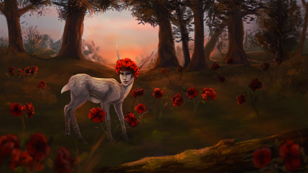 Most recent image: Poppies
