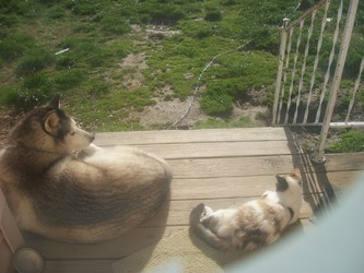 Tasha & Bella