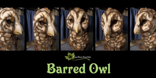 Barred Owl Turnaround