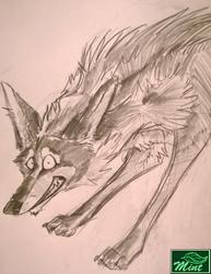coyote wheee doodle