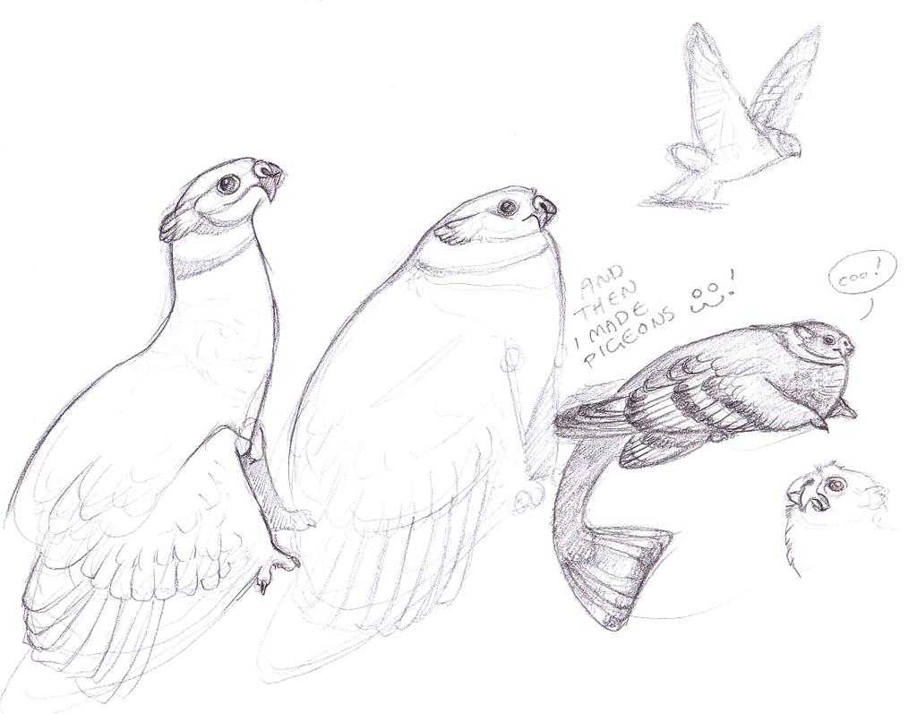 Coatl Pigeons