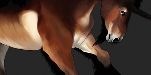 horse design IV