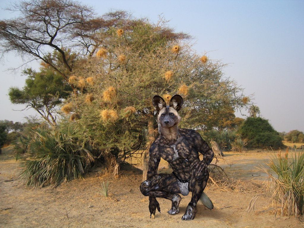 Most recent image: African Wild dog (Lycaon) or Painted wolf
