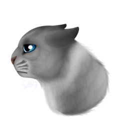 Generic Sad Cat.Png