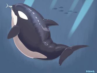 chubby orca