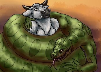 Anaconda Gotcha