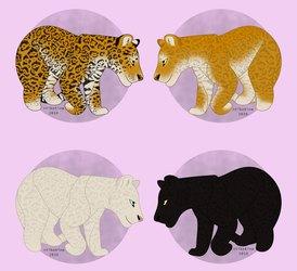 jaguar colors
