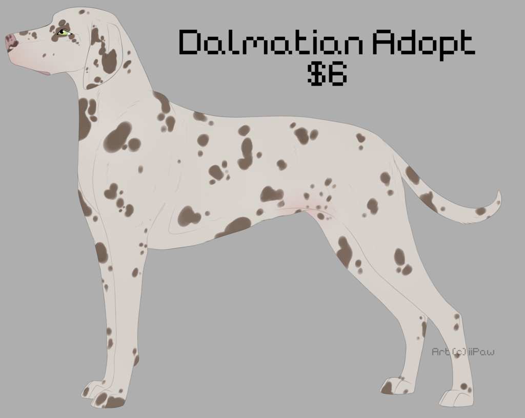Chocolate Dalmatian Adopt - OPEN