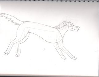 Breed Study: Saluki
