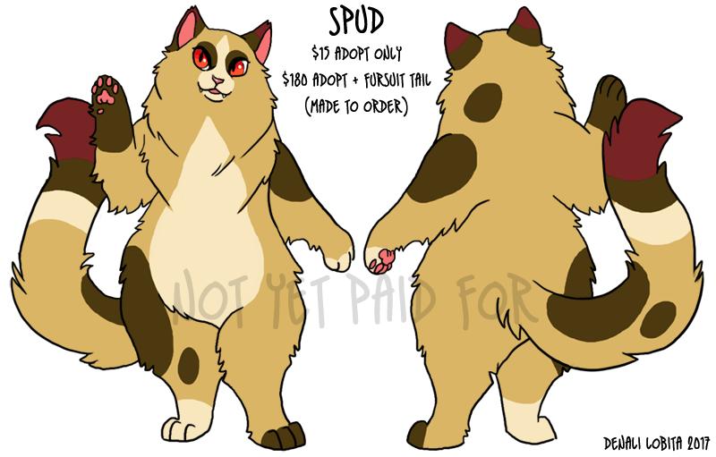 Spud - Longhair Cat Adopt