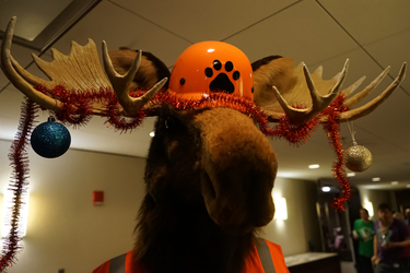 Christ-Moose~