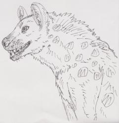 Spotted hyena sketch