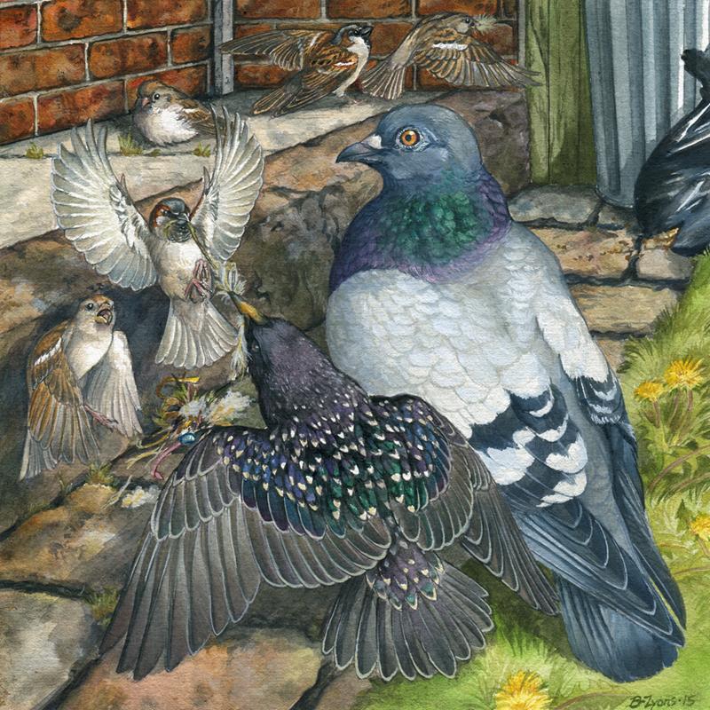 North American Invasive Birds