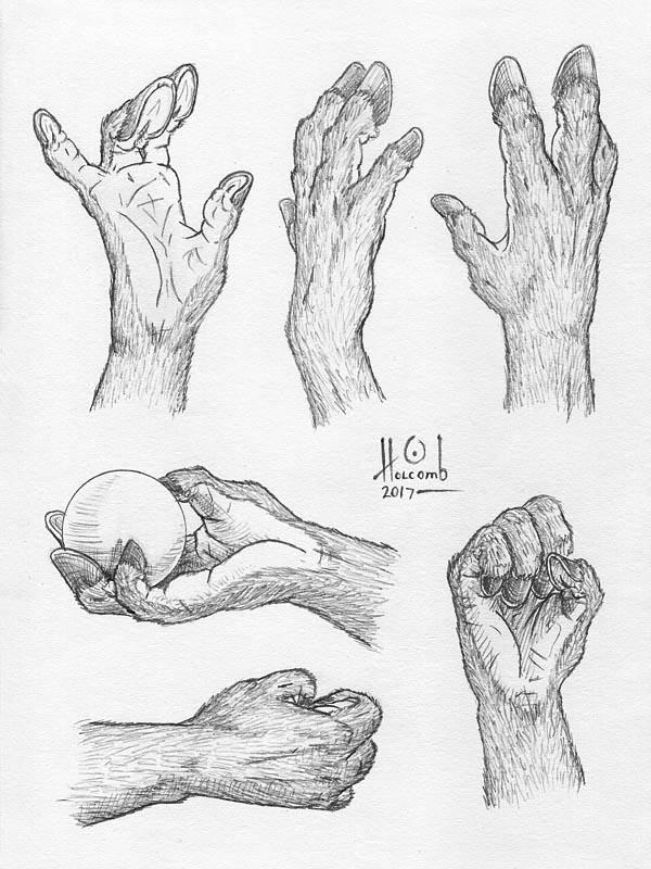 Equine Hand Studies