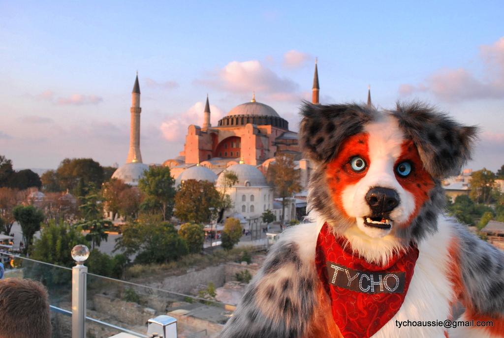 Fursuiting in Istanbul pt 1