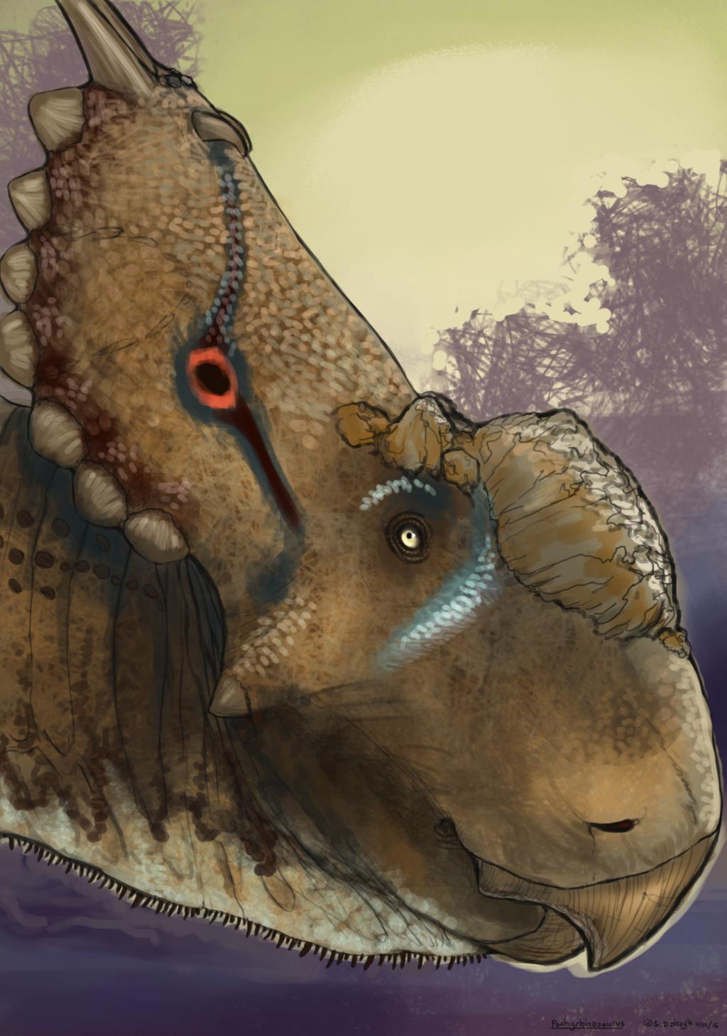 Dinovember - 10 - Pachyrhinosaurus