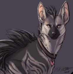 Fancy Aardwolf
