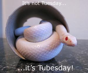 It's Tubesday!