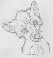 Dem Puppy Eyes