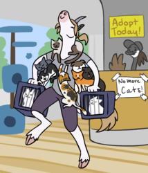 Kardi adopts the cat cafe