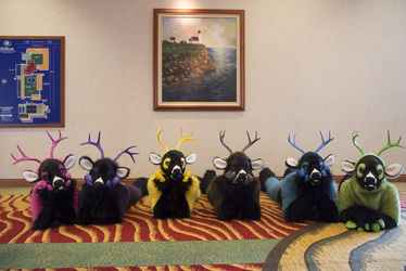 Row of Prized Bucks