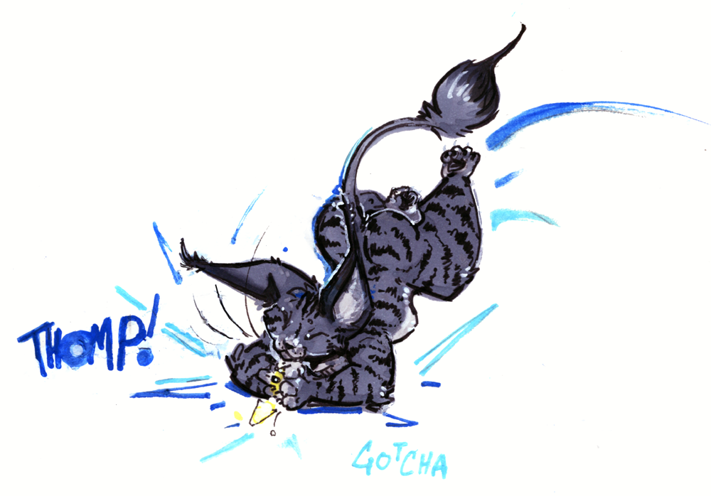 Most recent image: gotcha!