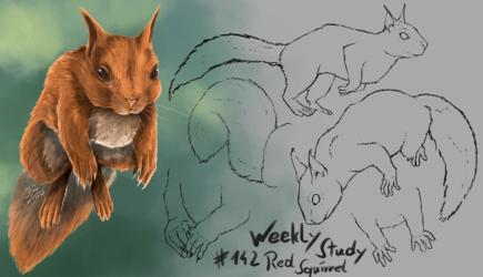 WeeklyStudies #142 Red Squirrel