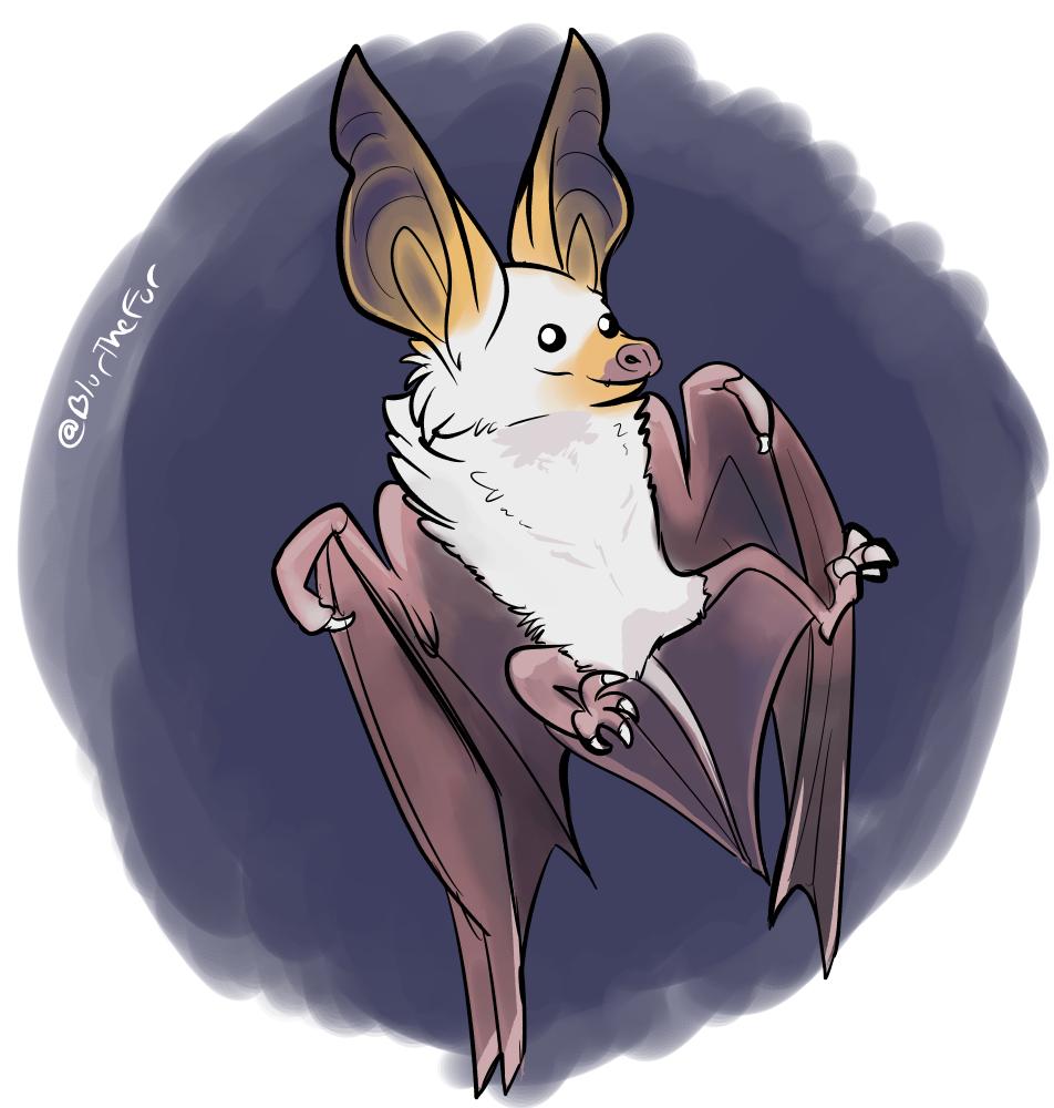 Daily Doodle #70 - Pallid Bat