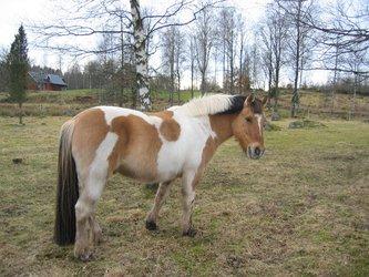 Horse, winter 2008