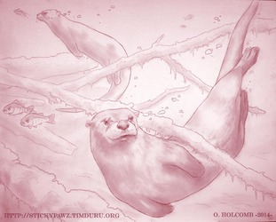 Otters (WIP)