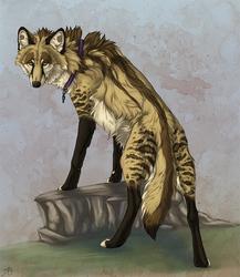 Maned Wolf Aranur