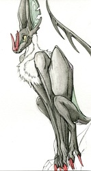 Quinn Watercolor Doodle