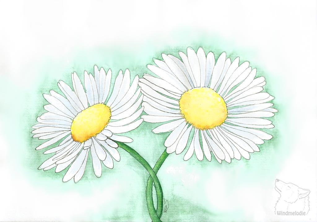 Little Daisy -gift-