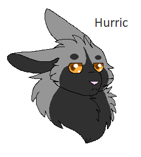Hurric the rabbit
