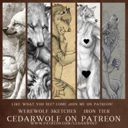 Patreon Werewolf Sketches