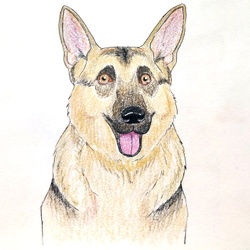 Doggy Color Sketch