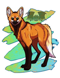 Maned Wolf - In Shop!