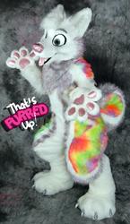 Sparkle Husky Auction