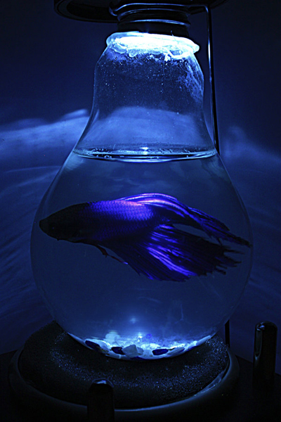 Featured image: Fish in a Light bulb
