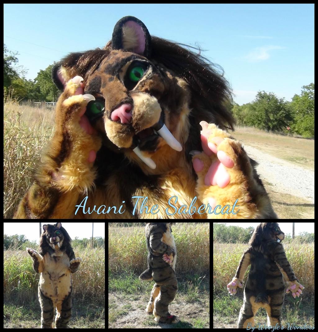 Avani The Sabercat