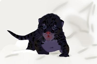 Noć Mačka Cub