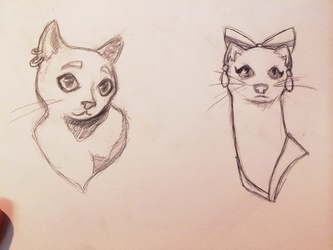 Weasel and Cat
